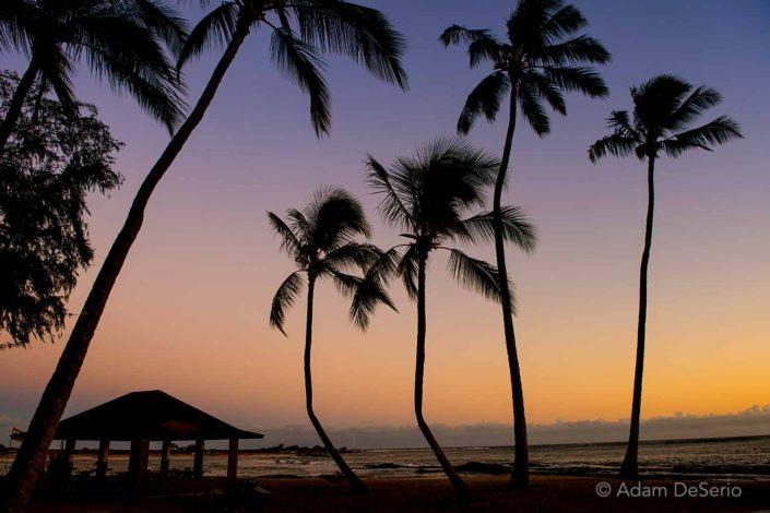 Palm Tree Hut