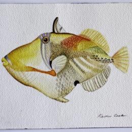 Humuhumunukunukuapua'a, Watercolor, K Cook painting