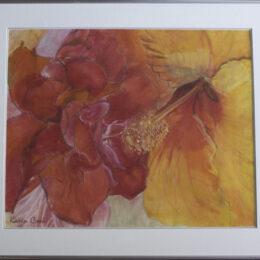 Hibiscus, chalk pastel on vellum, K Cook drawing
