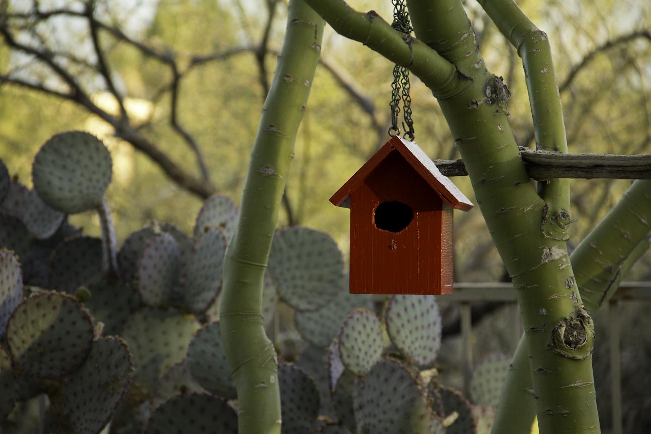 Little Red Bird House