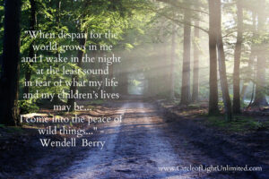 image of road in the woods with the quoted text