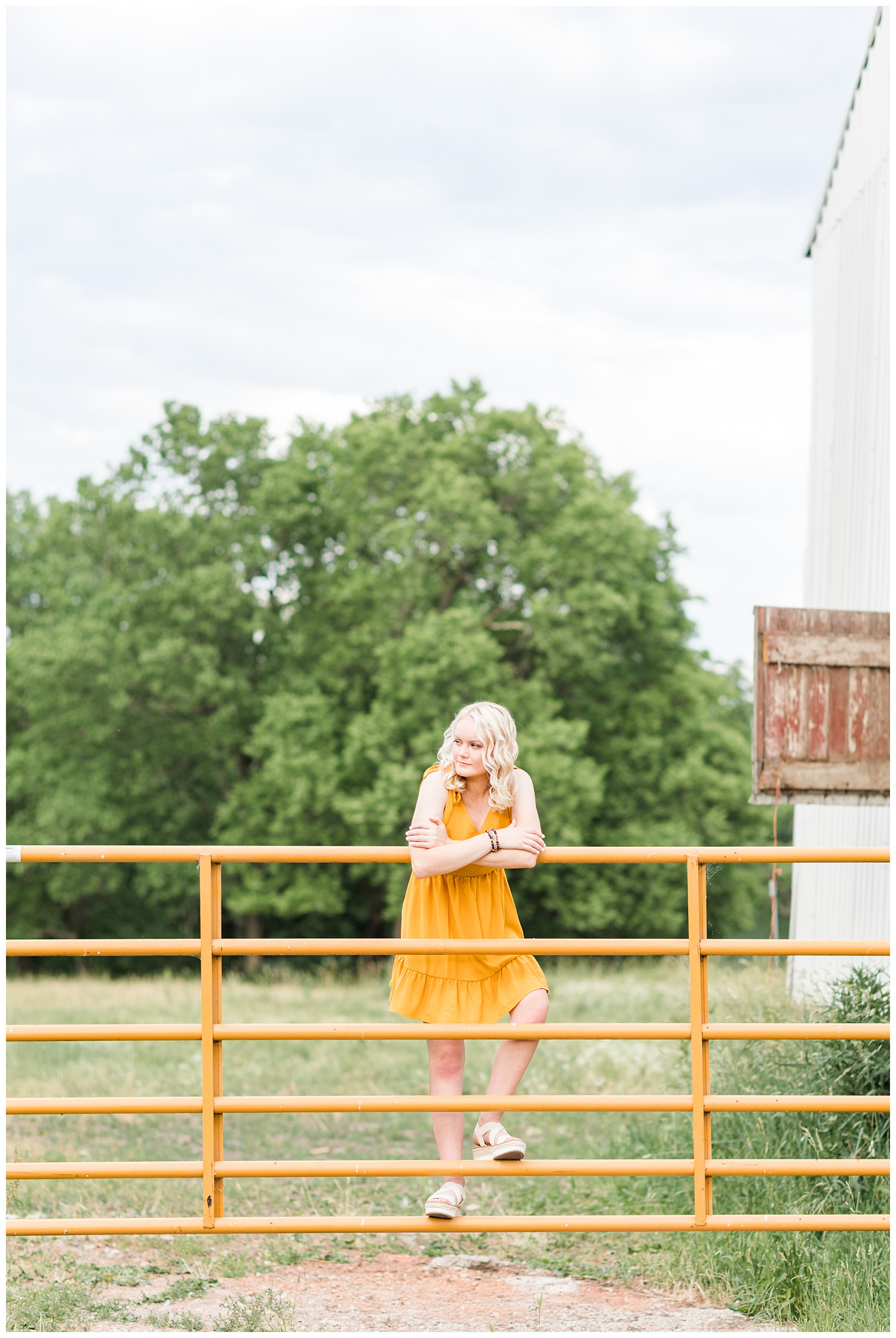 Senior girl Molly wearing a yellow dress climbing a cattle gate   CB Studio