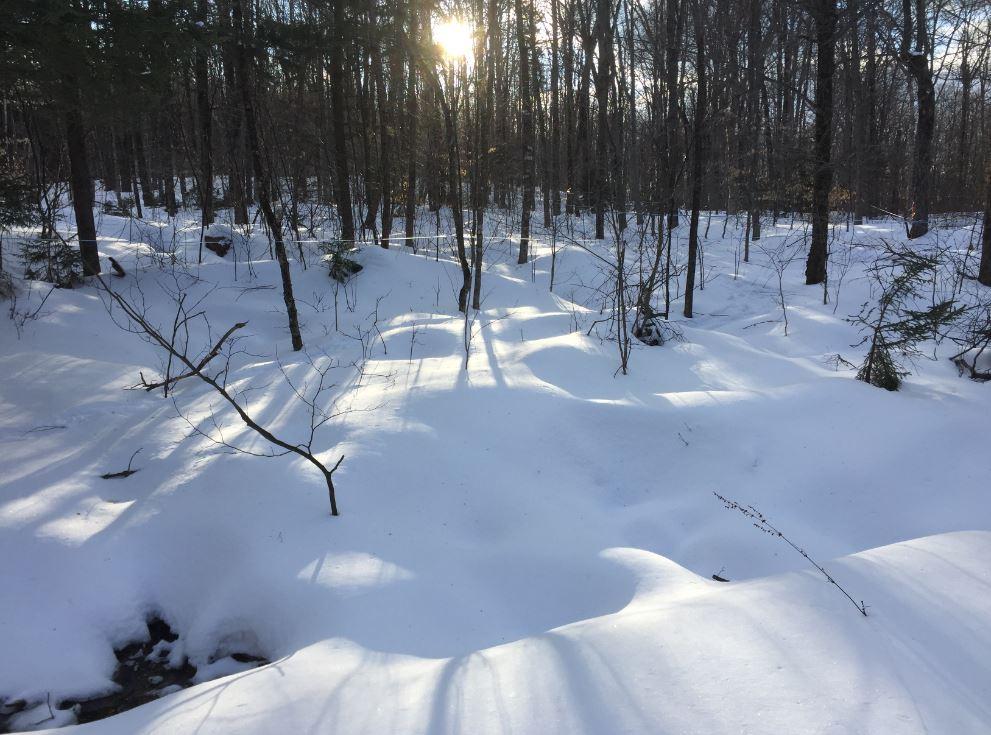 Life under the snow is just dormant getting ready to burst with green in a few weeks. La vie sous la neige n'attend que son tour pour se parer de vert dans quelques semaines