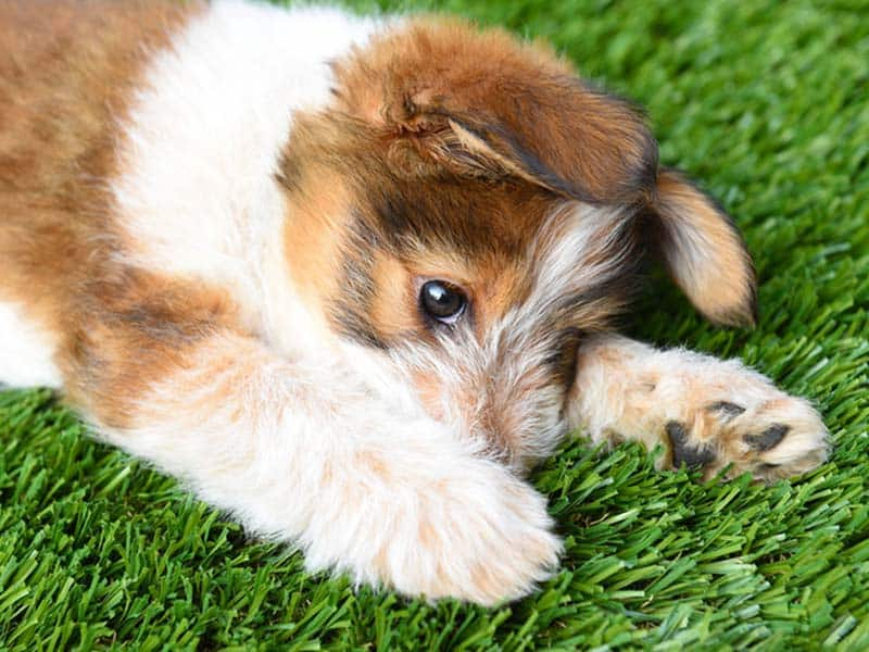 Artificial Grass for Pet Owners
