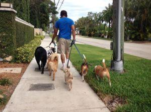 pack leader walk