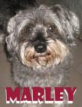 Marley (schnauzer)