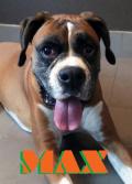 Max_boxer