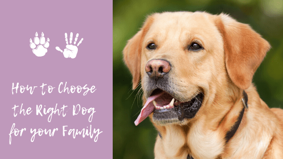 How To Choose The Right Dog For Your Family