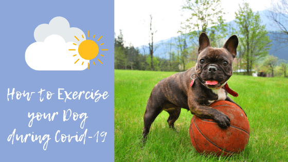 How to exercise your dog (like doggy day care) during Covid-19