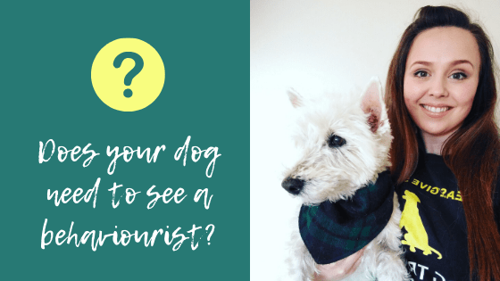 How to tell if your dog needs a behaviourist