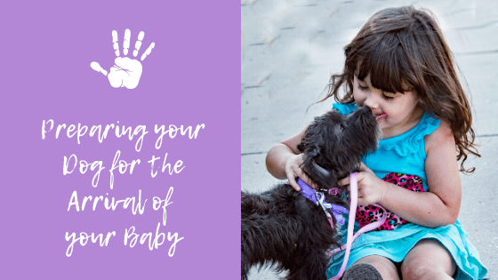 Preparing your Dog for the Arrival of your Baby