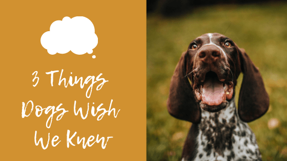 3 Things Dogs Wish We Knew