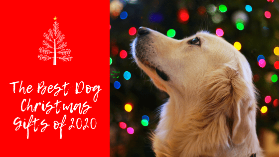 The Best Dog Christmas Gifts of 2020