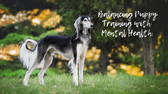 Balancing Puppy Training with Mental Health