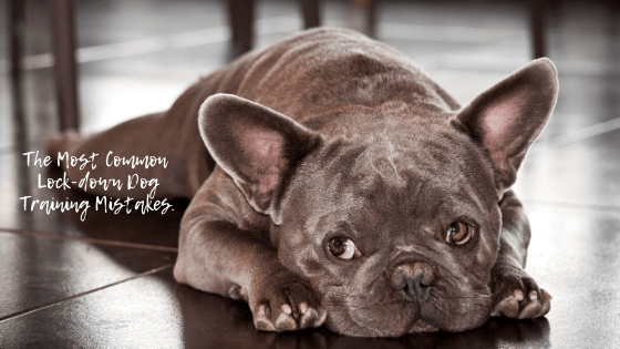 The Most Common Lockdown Dog Training Mistakes