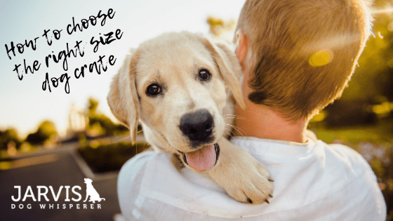 How to choose the right size dog crate