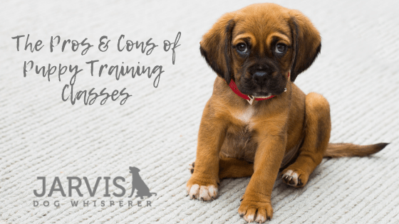 The Pros and Cons of Puppy Training Classes