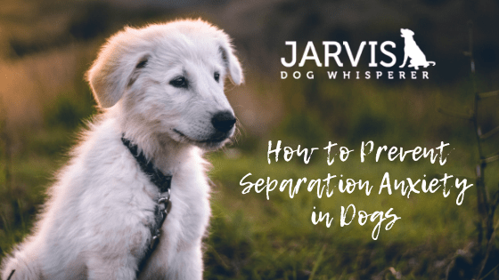 How to Prevent Separation Anxiety in Dogs (and What Causes it)
