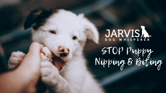 STOP Puppy Nipping & Biting
