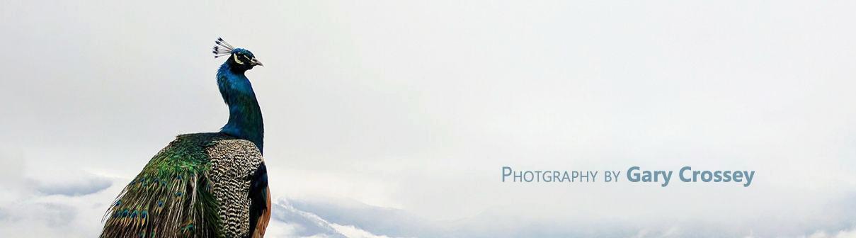 Photography by Gary Crossey - Peacock Sky