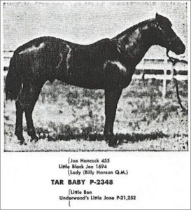 TarBaby02 hancockhorses.com