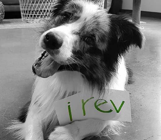 dog at REV
