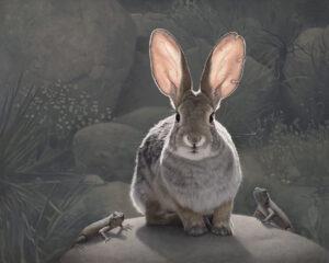 3770_Susan McDonnell-painting-rabbit-realism-900