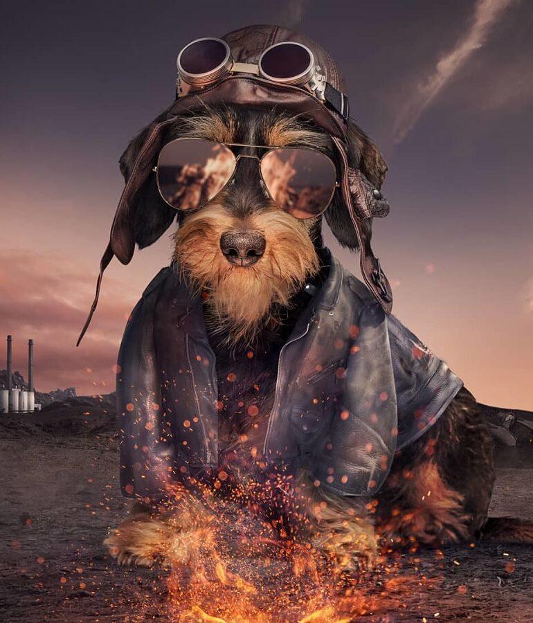Josh-Dykgraaf-dog