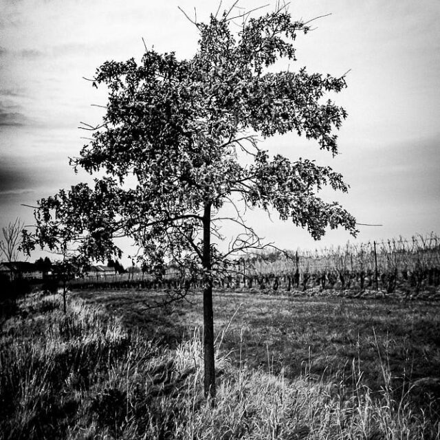 #escarpment #blackandwhitephotography  #bw #vine #vineyards