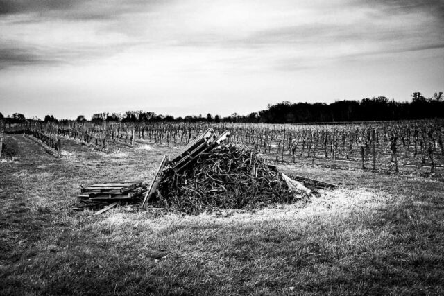 #escarpment #vineyards #vine #blackandwhitephotography #landscape