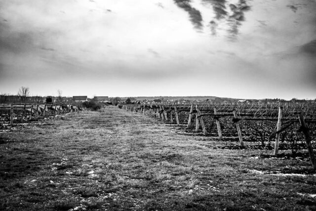 #escarpment #blackandwhitephotography #bl #vineyards #vine