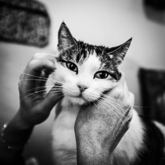 #willowthecat #catsofinstagram #blackandwhitephotography