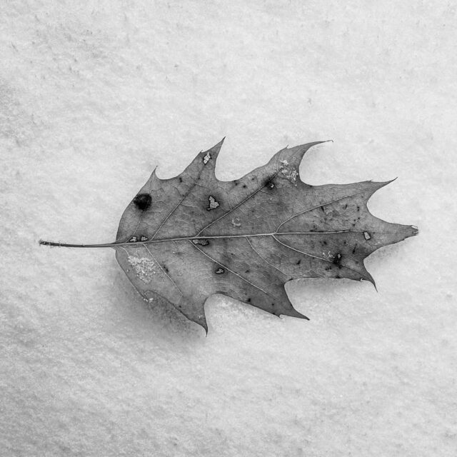 #snow #leaf #winter #blackandwhite  #bw #nature