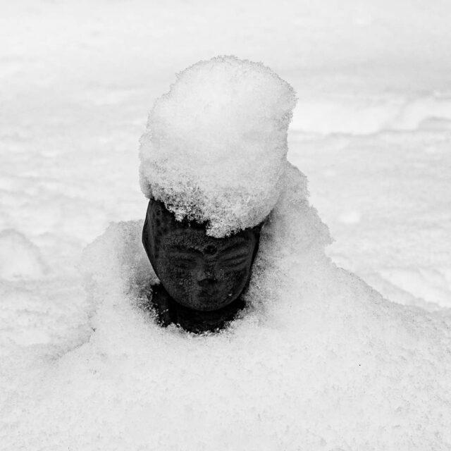 #blackandwhite #snowday #garden #bw #snow