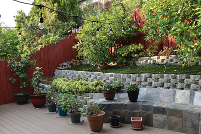 Ioana-Marius tiered back yard with multiple trees and potted plants