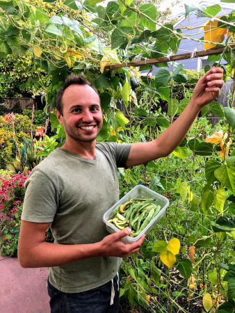 Phil harvesting green beans from our garden