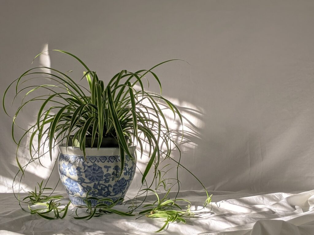 Keep houseplants to remove indoor air pollution.