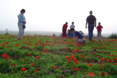 Flowers in Negev