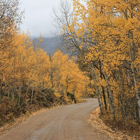 Mt. Elbert Lodge Fall
