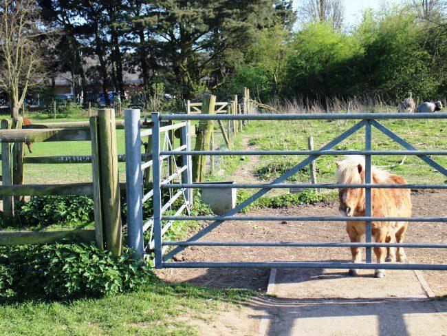 Hounslow Urban Farm Pony