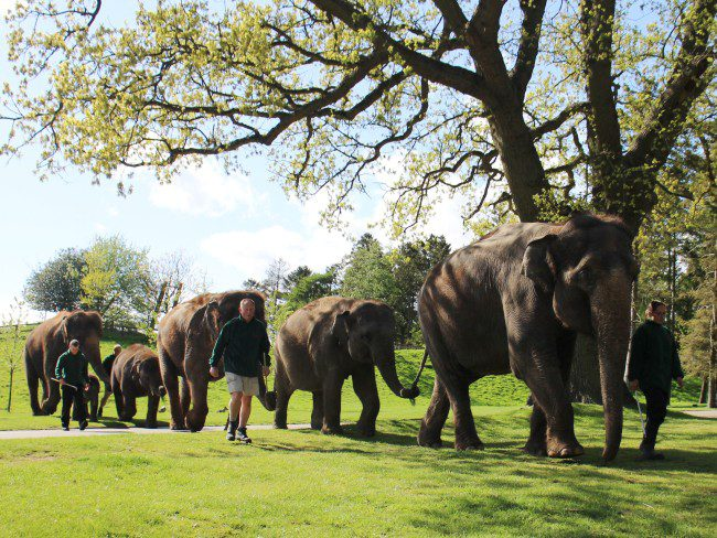 Elephants at Whipsnade Zoo