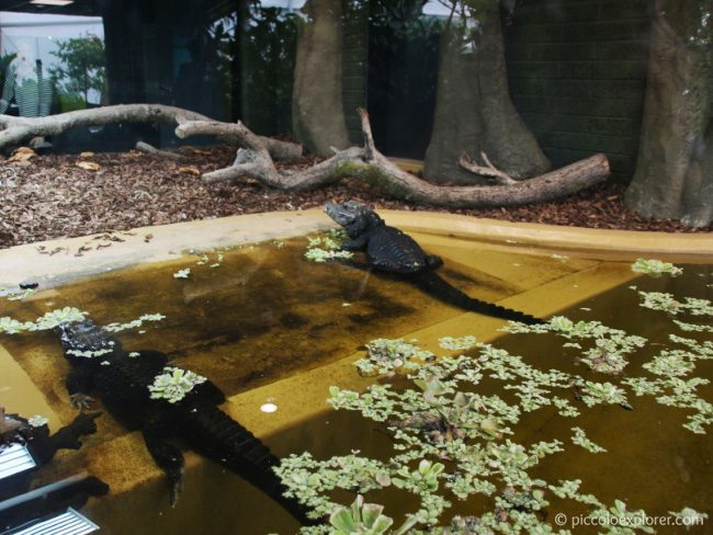 Crocodiles at Butterfly House