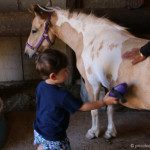 Pony Experience at Turtle Bay Resort Oahu