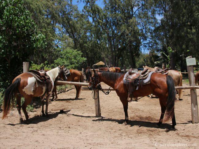 Turtle Bay Resort Horseback Riding North Shore