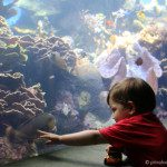 Our Visit to the Waikiki Aquarium