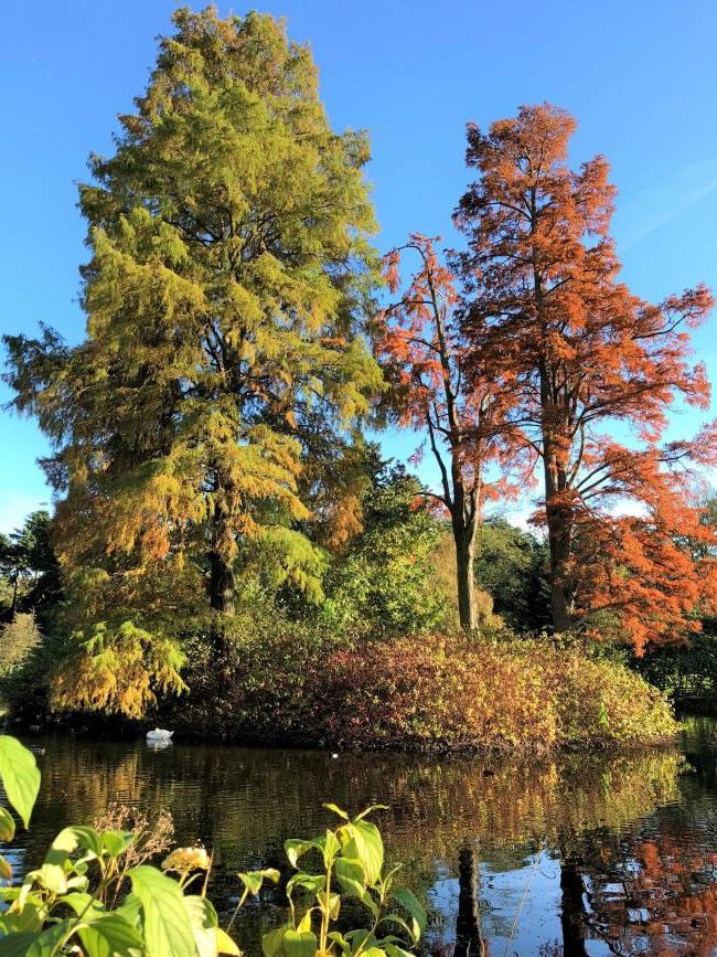 Kew Gardens London Autumn