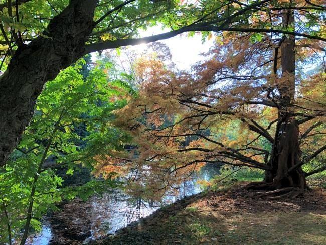 Autumn trees Kew gardens