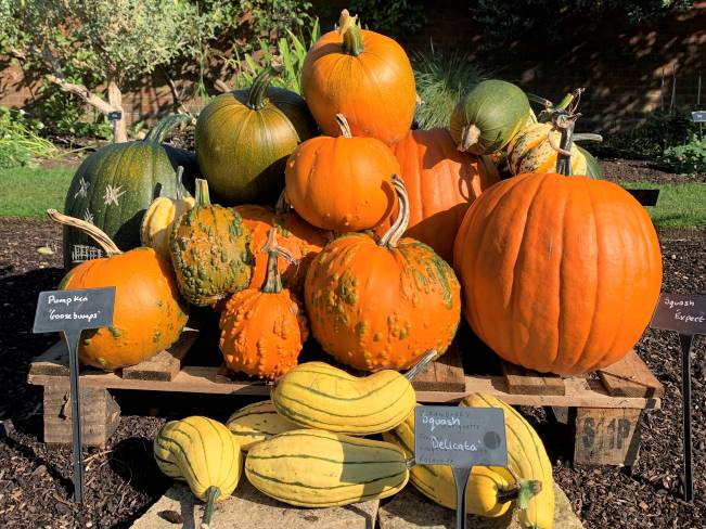 Pumpkin patch at Kew Gardens London