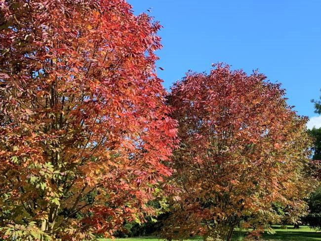 Fall foliage Kew gardens London