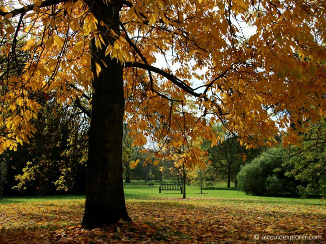 Autumn Walk at Kew Gardens